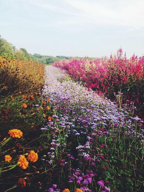 New neon lighting roxo ideas violet aesthetic, dark purple aesthetic,. field of flowers on Tumblr