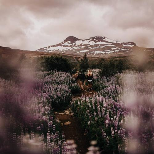 amandaricks.com/friends-of-the-wilderness/