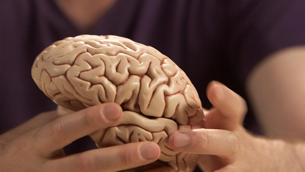 Golpe al cáncer: científicos españoles descubren una forma de frenar tumores cerebrales más letales