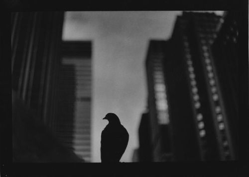 tumblr_pga65l5vYg1qz6f9yo3_500 Dark City, Giacomo Brunelli Random