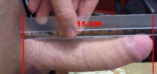 pau duro de 15 cm