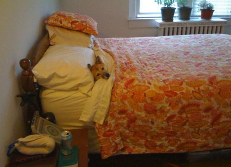 Mascotas durmiendo