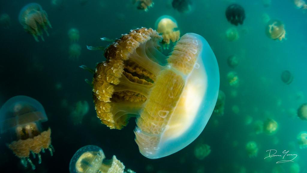 Tropical Aquarium Digital Ph Meter Pen Marine Test Kit Relieving Heat And Thirst. Reef Tank