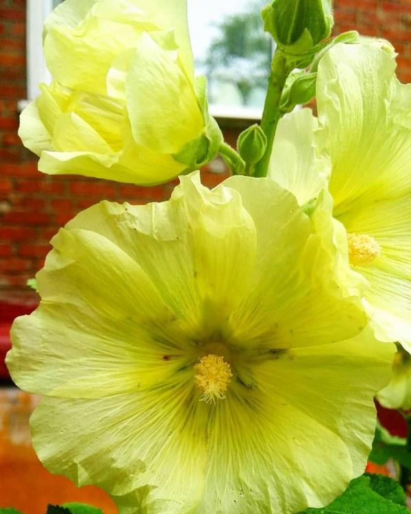 Фото на телефон — Фотографируя цветы в режиме макро ...