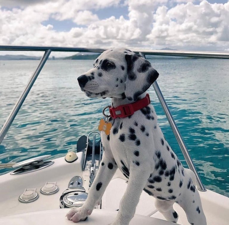 Perro marinero