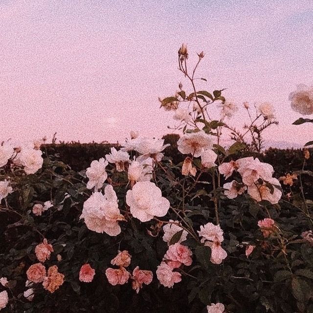 Share wallpaper with more option. 𝚔𝚑𝚛𝚒𝚜𝚝𝚒𝚗𝚎 ♡ — 🌸 BTS OT7 PINK AESTHETIC 🌸 Dm me if i should