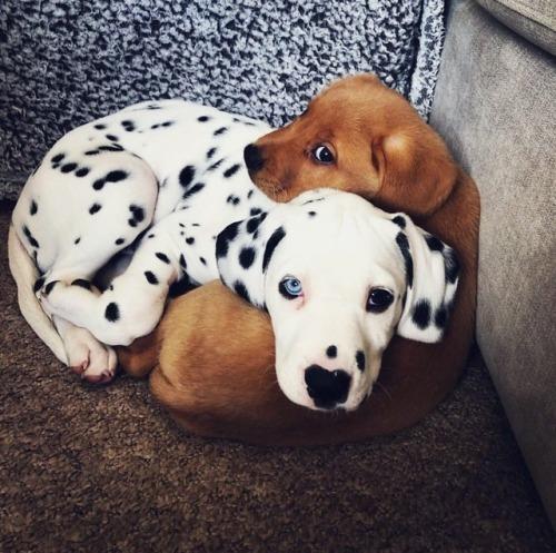 Recopilación de perretes bebés II