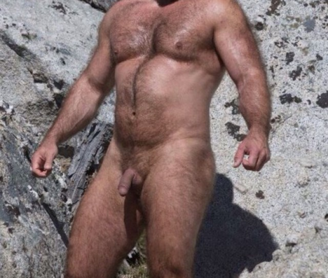 Porn Free Bear Picture