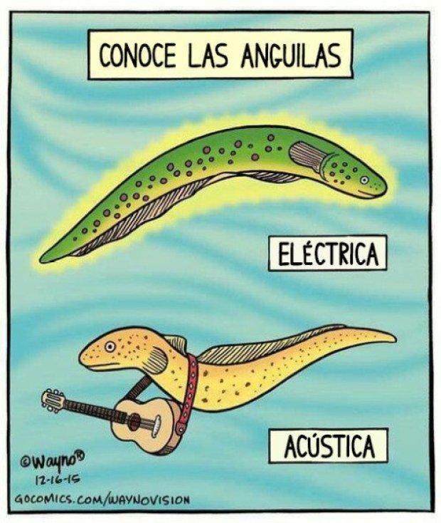 Tipos de anguilas