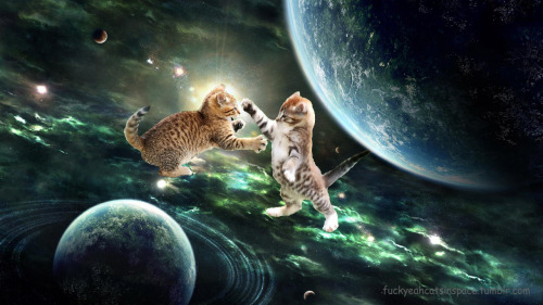 Image result for cats in space