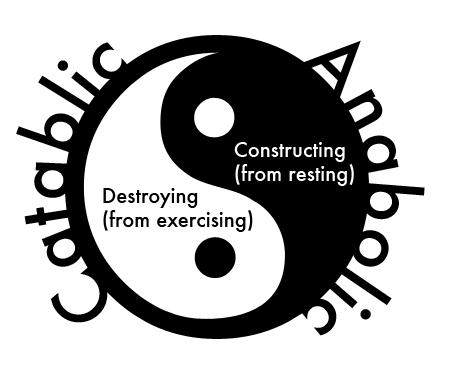 Catabolic Anabolic YinYang