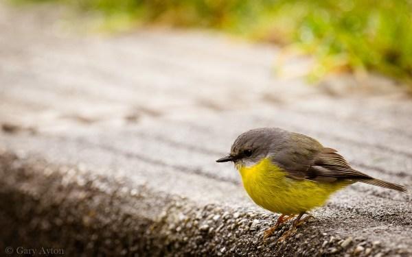 cropped bird