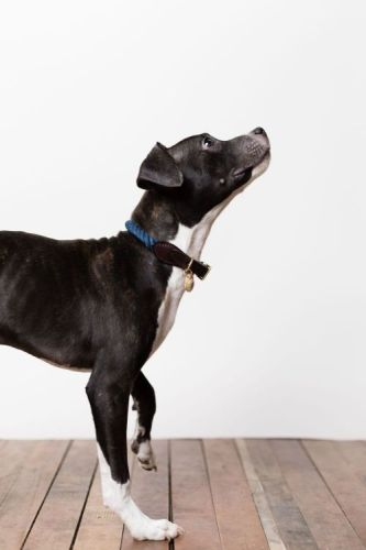 Dog Safety & Colars @sabonhomeblog