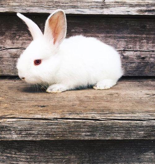amandaricks.com/so-cute-and-bunny/