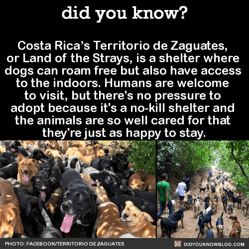 Costa Rica's Territorio de Zaguates, or Land of the Strays, is a shelter where dogs can roam free but also have access to the indoors. Humans are welcome to visit, but there's no pressure to adopt because it's a no-kill shelter and the animals are so...