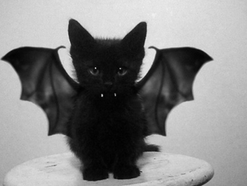 Image result for black cat with wings