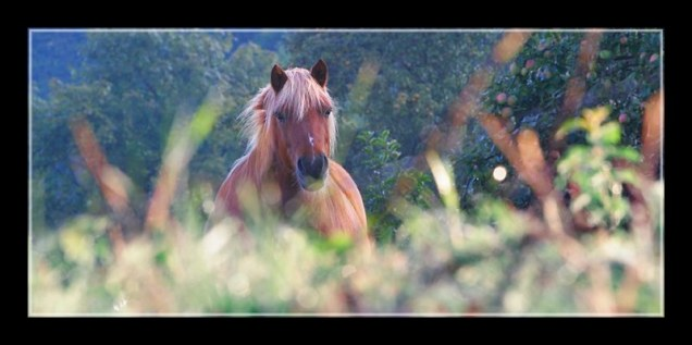 cheval_0457