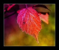 feuille_4628