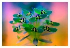fleur.1_0820