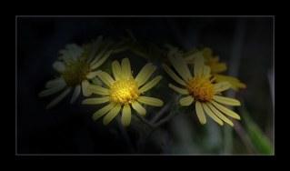 fleur_4675