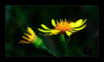 fleur_4731