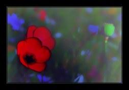 fleur_9286