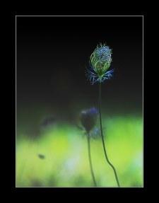 fleurs0_9370