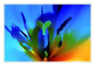 tulipe1_5179