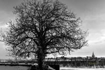 serge - theme noir et blanc - 01