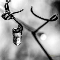 serge - theme noir et blanc - 14