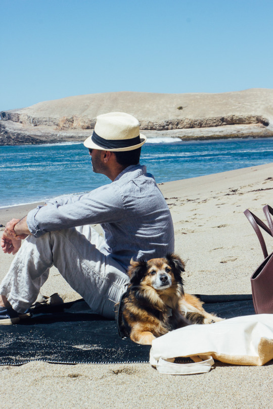 dog friendly Santa Cruz, Santa Cruz dog friendly hikes, dog friendly hikes santa cruz, pet friendly hotels santa cruz, dog friendly hotels santa cruz, what to do with your dog in Santa Cruz