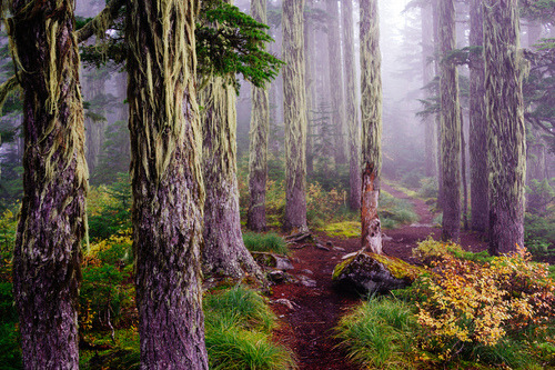 Mossy firs, and a trail that is begging to be run. (Snoqualmie Pass, Washington | Mark Griffith)