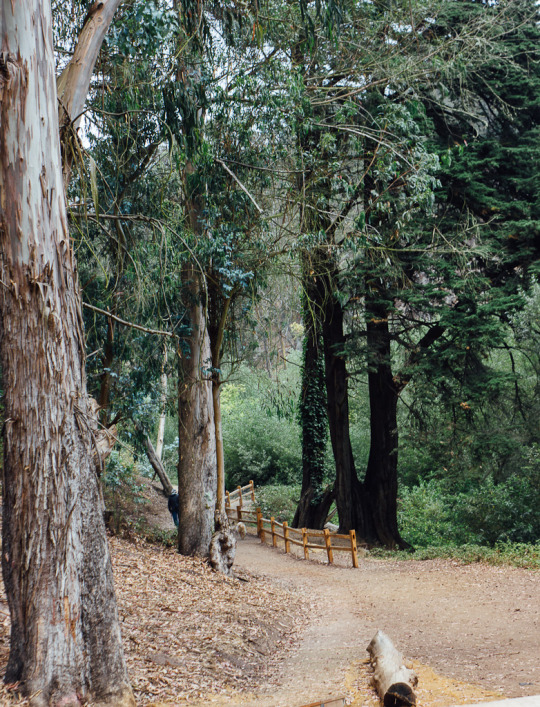 Glen Canyon Park, dog friendly hiking trails, dog friendly San Francisco park, dog park in SF