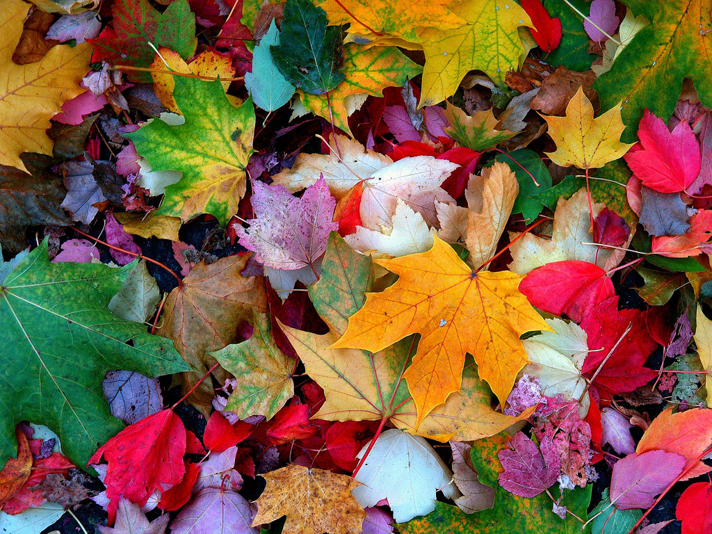 Resultado de imagen para otoño tumblr love
