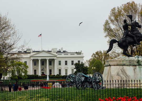 cherry blossoms Washington DC White House President Obama