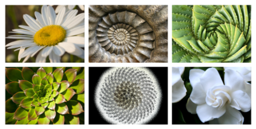 Image result for images flower of life fibonacci code flowers