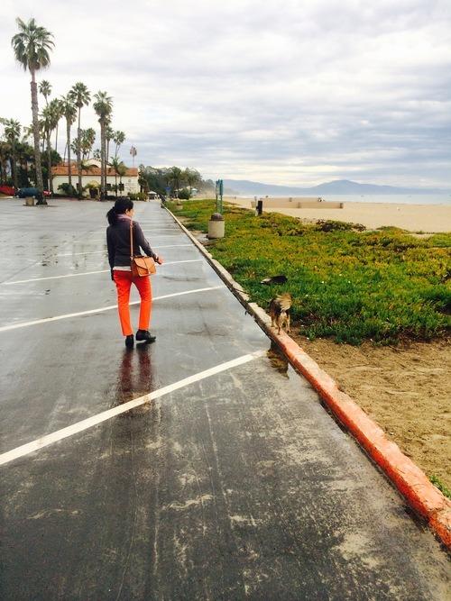 Motel 6: a dog friendly lodging in Santa Barbara