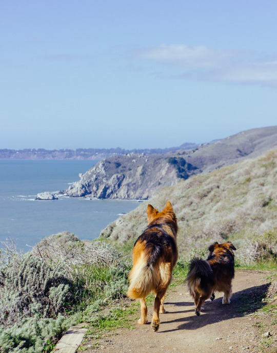 Dog Friendly Road Trips From San Francisco
