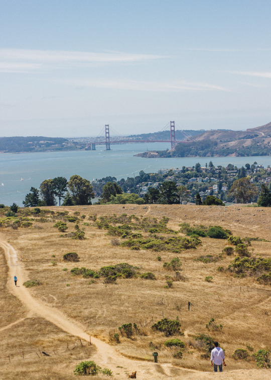 view of Golden gate bridge from Tiburon's St. Hilary Open space Preserve