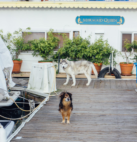 Dog Friendly Sausalito A List Of Fun Things To Do In Sausalito With