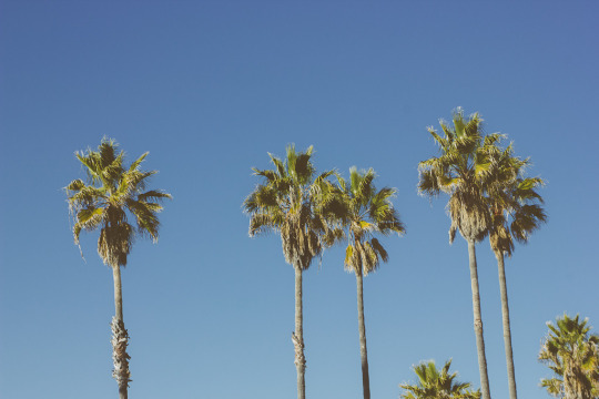 Los Angeles winter travel guide venice beach