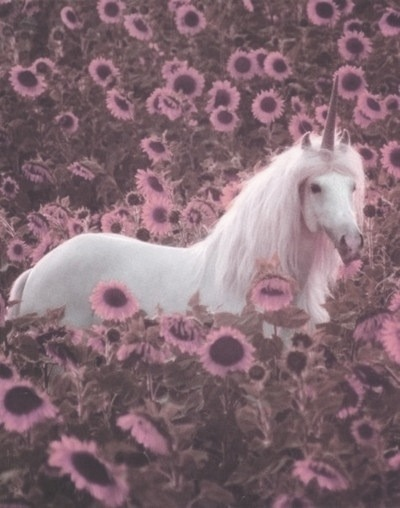 Grunge Unicorn Tumblr
