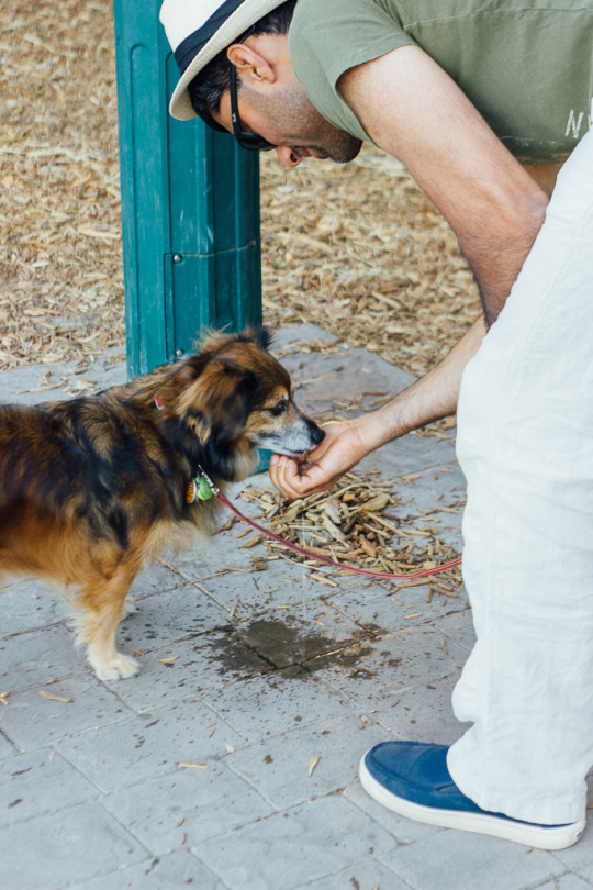 dog friendly Sebastopol, what to do with your dog in Sebastopol