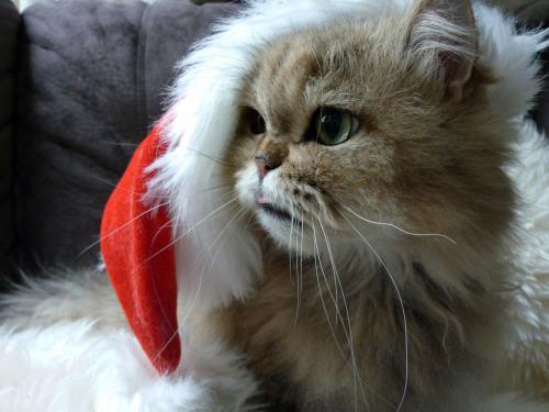 amandaricks.com/ho-ho-ho-kitty/