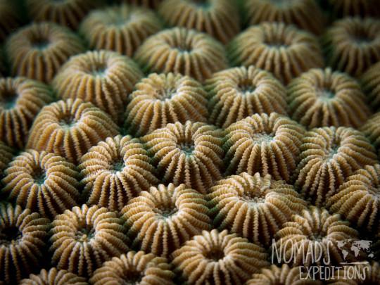 underwater photography ocean sea Indonesia marine coral macro polyp indo pacific tropical coral reef diving scuba snorkel animal wild color Bali