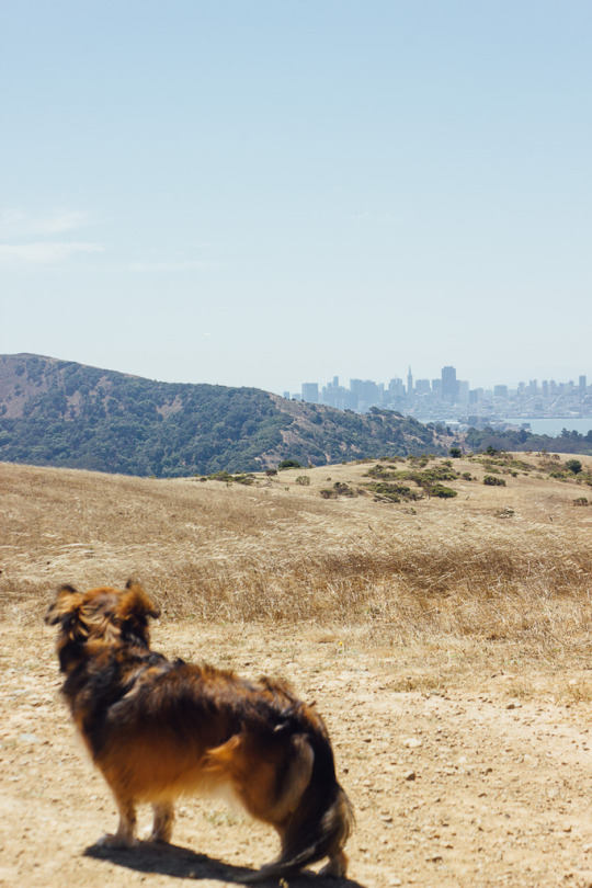 bay area hikes with dogs a dog friendly hiking trail in