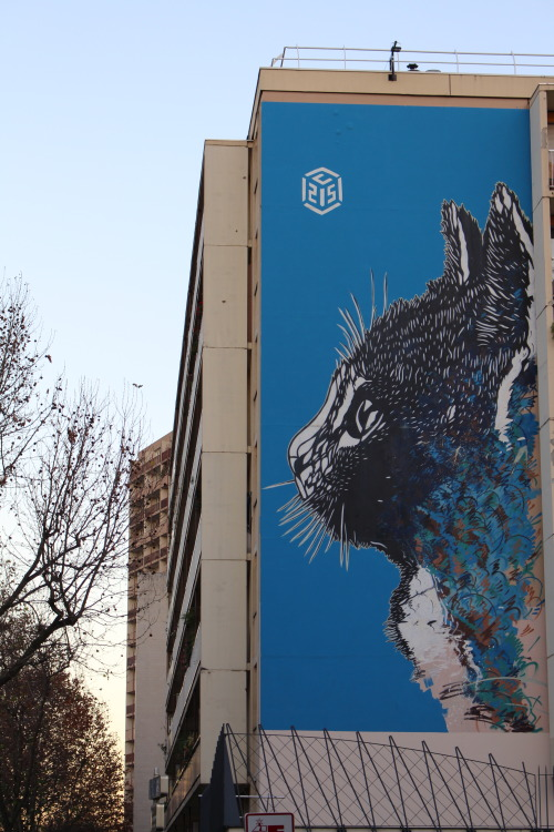 bfstreetwalls:  Mural by C215 in Paris 13th district. Fresque de C215 dans le 13ème arrondissement de Paris.