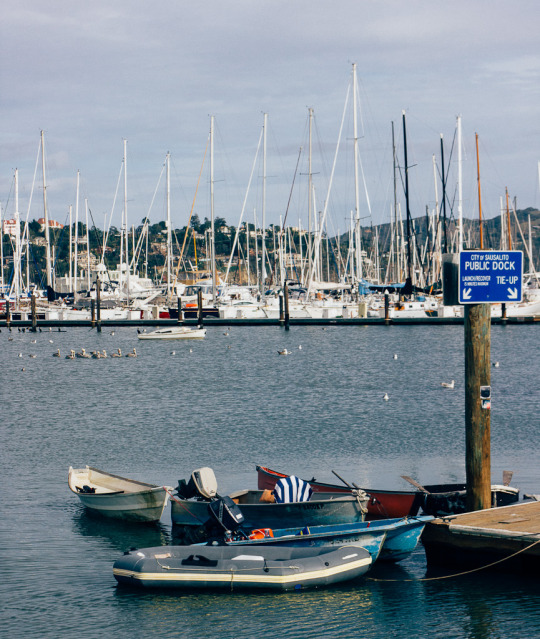 Sausalito Bay Area airbnb pet friendly staycation, sausalito marina