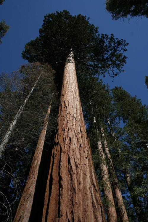 YosemitePhotographer: Craig Harrishttp://craigharrisphoto.tumblr.com