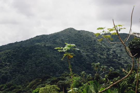 Single Travel Puerto Rico El Yunque